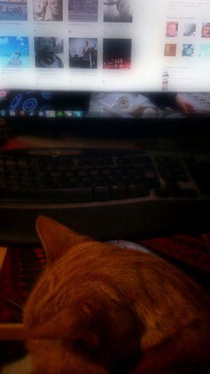 Cat At Home Indoor My Darling Cat Edit Computer