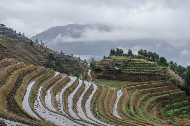 Panoramic View Of Rice Paddy Against Sky