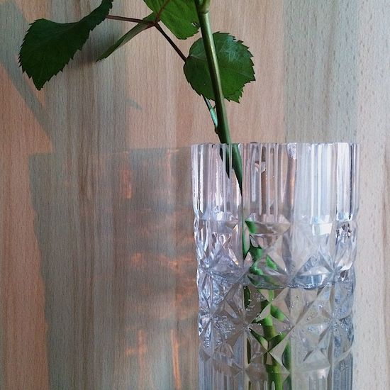 Leaf Plant Growth Nature Green Color Flower Close-up No People Freshness Indoors  Beauty In Nature Water Day Sunlight Sunset