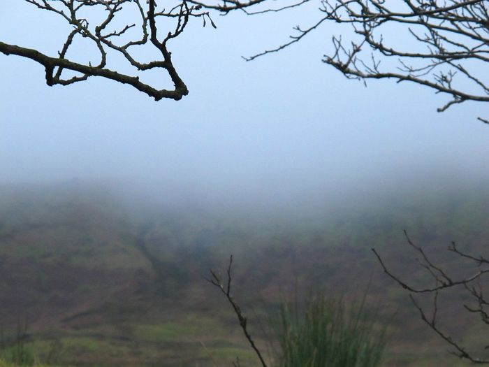 Nature Tree Fog Landscape Sky Scenics Beauty In Nature Outdoors No People Branch Water Tranquility Nature Reserve Day EyeEmbestshots Pendle Hill Witchespath Eye Em Nature Lover Eerie Beautiful Eyeemphotography Beauty In Nature Fine Art Photograhy Witchcraft  Cold Temperature Witchesofinstagram