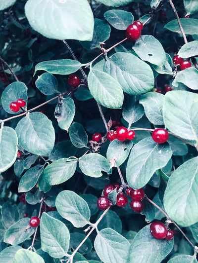 Berries Berry