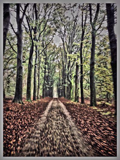 Nijmegen Heumensoord Forest MTB Biking Trees
