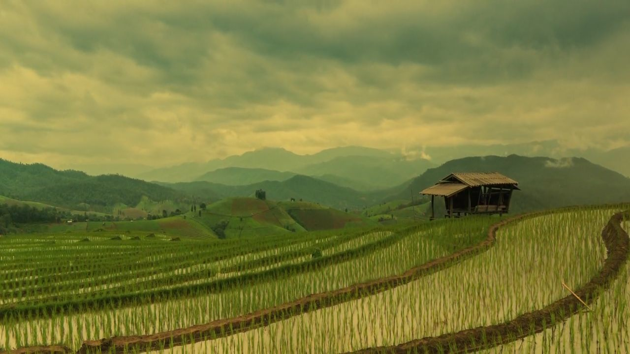 agriculture, farm, field, landscape, mountain, scenics, rice paddy, rice - cereal plant, nature, crop, rural scene, beauty in nature, growth, outdoors, cereal plant, tranquil scene, terraced field, sky, tranquility, no people, mountain range, architecture, day