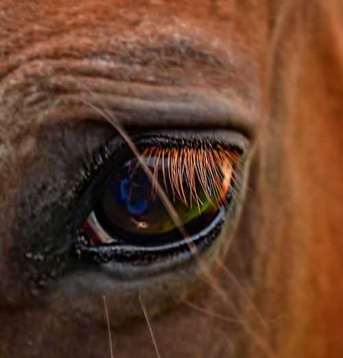 The eyes are the window to the soul. 🐴 Horses Animal Eye