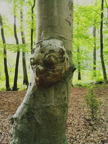 Sculpture Human Representation No People Seltenheit Baumstamm Crazy Naturelovers Outdoors Nature Nature_collection