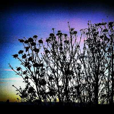 Summer afternoon,sunset,purple skys,colorado