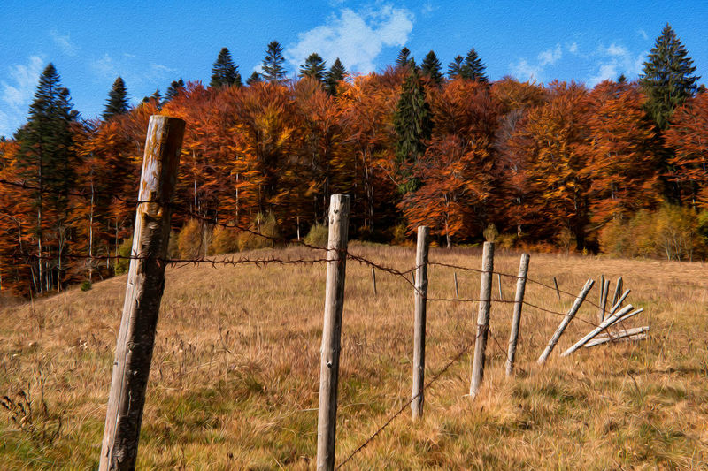 Autumn pastel landscape Autumn Land Fence Boundary Landscape Non-urban Scene Scenics - Nature No People Outdoors Forest Trees Countryside Artistic Effect ArtWork Woods Meadow Farm Hill Sunny Foliage Beautiful Nature Pastel Pastel Colored