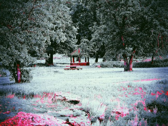 Pink Gazebo Gazebo At The Park Nature Photography Nature Outdoor Outdoors