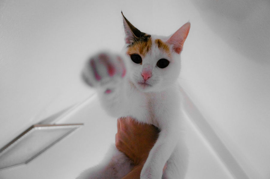 Leona is here to take your Soul 👻🐈 Cat Portrait Flying Portraits Aerial View Aerial Shot MnMl Mnmlsm Minimalism Minimal Minimalistic Minimalmood Minimalist Minimalobsession Shades Of White Whity Mobilephotography Caturday Cat Lovers Beautiful Beauty Lovely Shootermag Portraiture Flying