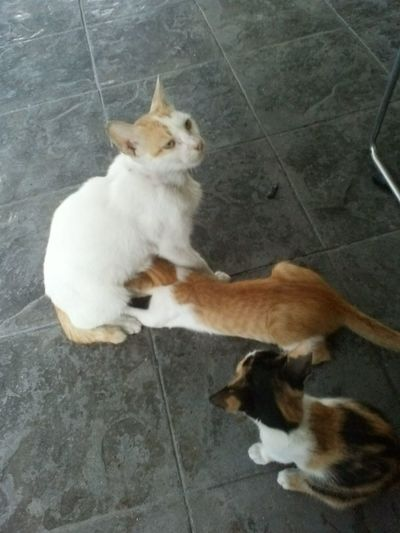 found their mother :D Cat Love Philippines