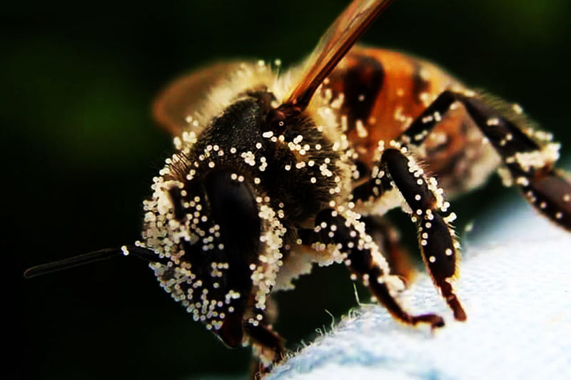 Macro zoom lens Beauty In Nature Bee Close-up Insect Nature One Animal Outdoors Polllen