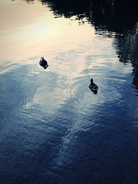 Nice Sea Nature Animal Themes Water Reflection Animals In The Wild Lake High Angle View Bird Outdoors Day No People Animal Wildlife Beauty In Nature Sunset Swimming