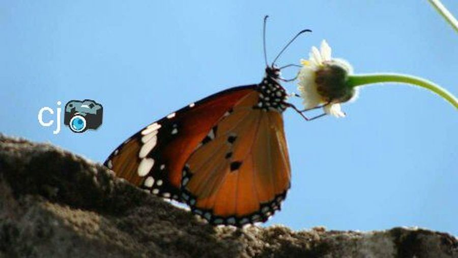 My cam Butterfly Flawer🌸 Love♥