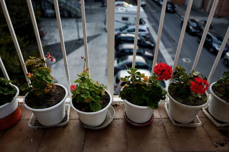 Close-up of potted plants in balcony