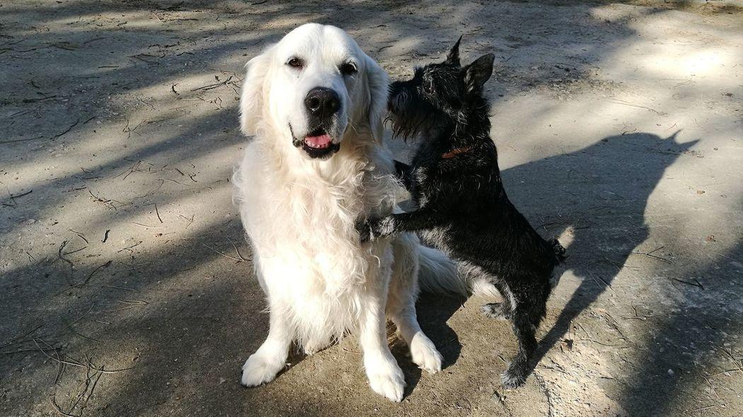 Dog Pets Domestic Animals Animal Themes Outdoors Amigos Perrunos Blanco Y Negro Black And White Amistad AmistadParaTodaLaVida