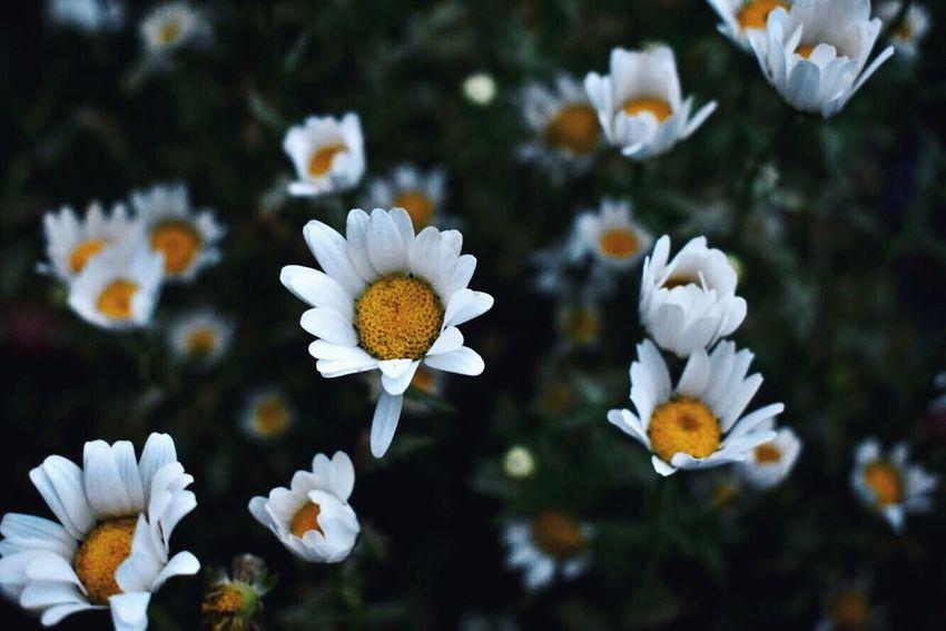 Flowering Plant Vulnerability  Plant Fragility Freshness Growth
