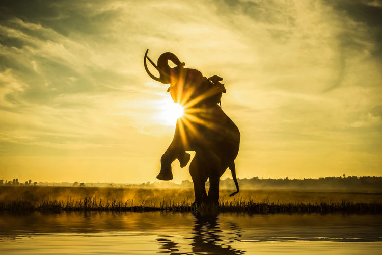 Silhouette man on elephant rearing in lake against orange sky