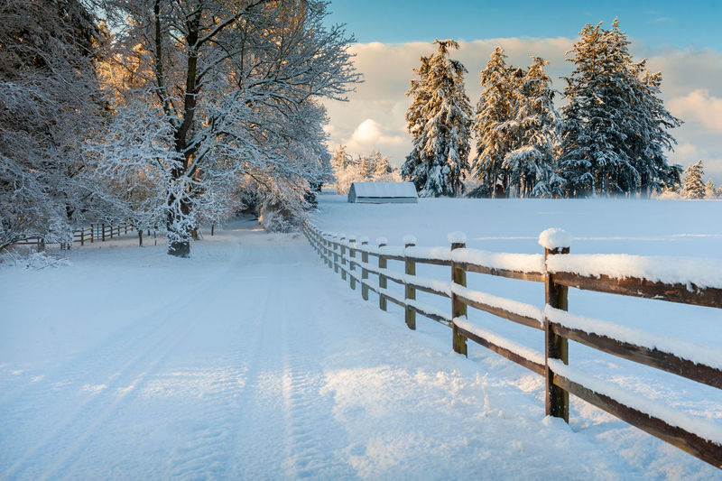 Winter Snow Scene in the Pacific Northwest. Christmas Country Lummi Island Pacific Northwest  Puget Sound Rural Washington Beauty In Nature Chilly Cold Cold Temperature Countryside Day Landscape Nature No People Outdoors Railing Scenics Snow Sunset Tree Weather White Winter