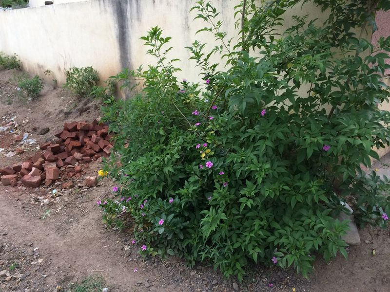 Beauty In Nature Blossom Bricks Compound Flowers Freshness Growth In Bloom IPhone 5S No People Outdoors Plant Plant Life