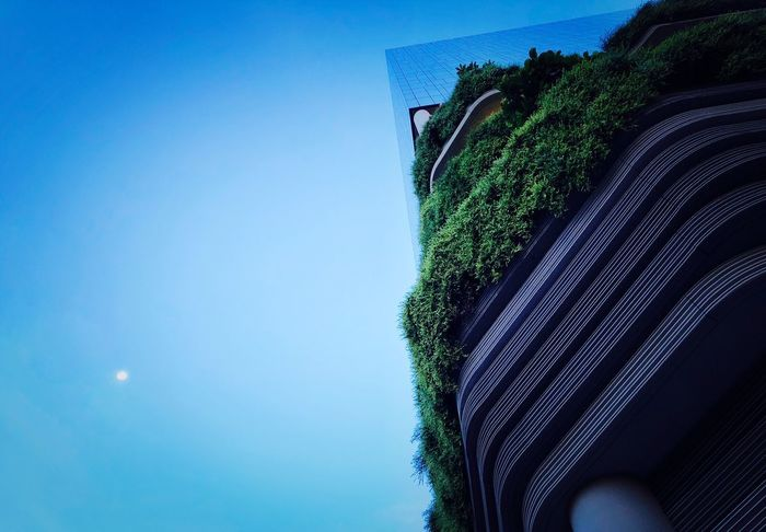 City Singapore Sky Blue Plant Tree Low Angle View Nature Growth Clear Sky No People Built Structure Copy Space Green Color Architecture Building Exterior Outdoors Day Beauty In Nature Tranquility Moon Ivy