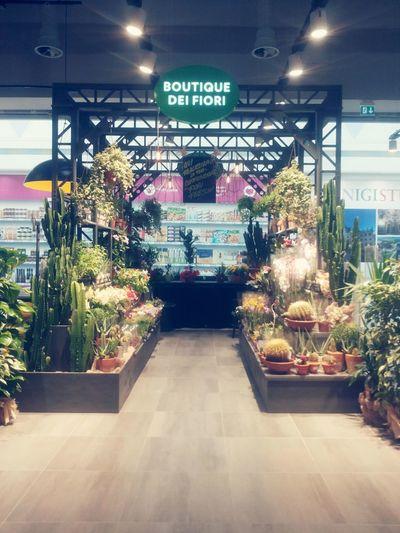 Supermarket Flower Supermarket Colours Geometric Lines Flowers,Plants & Garden Colors Plants