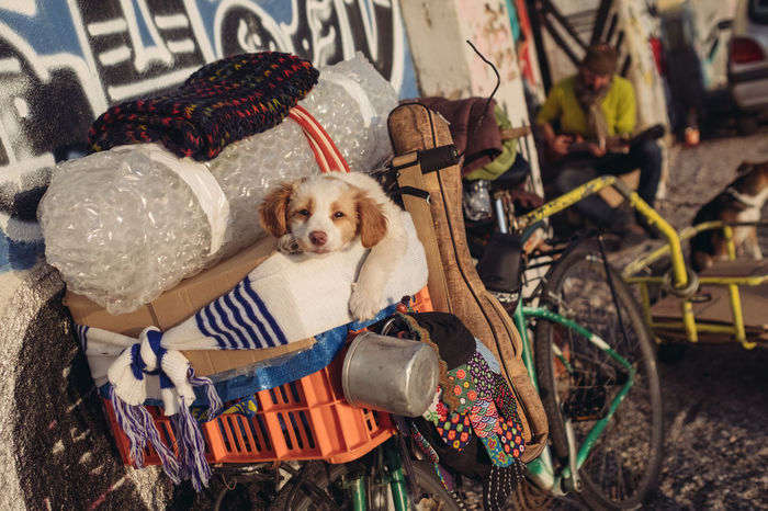 Streetphotography Animal Themes Baby Stroller Christmas Day Dog Dog Homelessness Domestic Animals Homeless Looking At Camera Mammal No People One Animal Outdoors Pet Clothing Pets Portrait