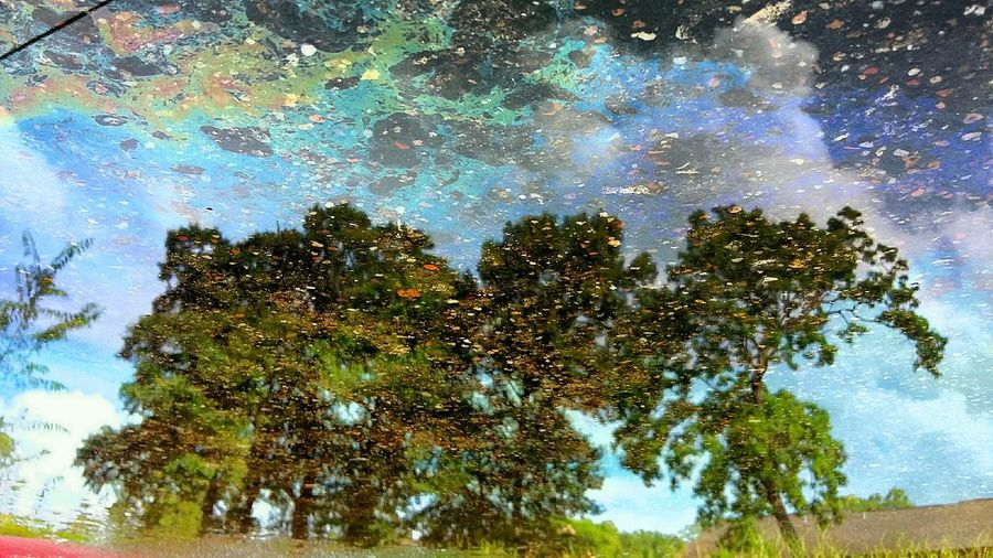 Tree reflection in a puddle of oily water. Reflections In The Water Reflections In Oily Water Tree Reflections Concrete Reflection The Innovator Showcase June Colour Of Life Colour Your Horizn