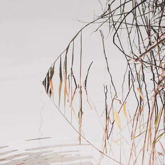 Autumn Autumn Colors Grass Reflection Abstract Close-up Day Lake Nature No People Outdoors Reeds Tranquility Water EyeEmNewHere Perspectives On Nature