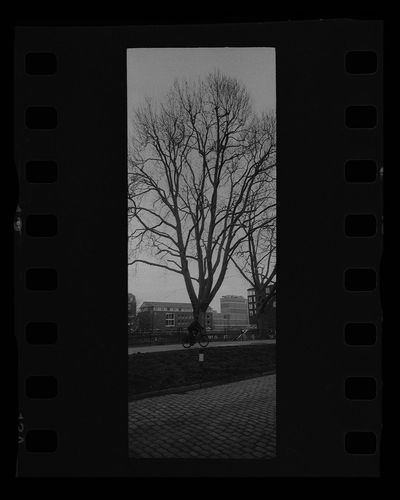 Silhouette trees and building seen through window