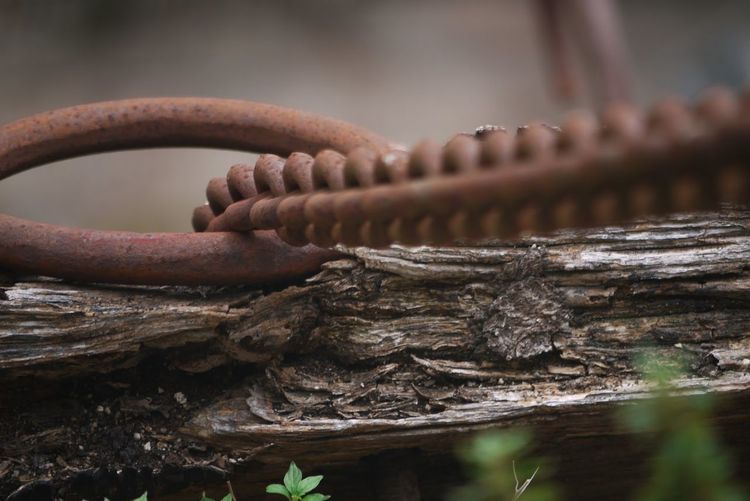 Close-up of rusty chain on wood