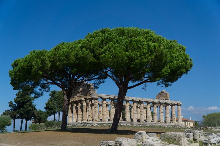 Paestum Roman ruins, Italy Roman Ruins Temple Tree Plant Architecture Built Structure Sky History The Past Tourism Nature Ancient Old Ruin Clear Sky City No People Building Exterior Travel Destinations Blue Travel Green Color Day The Architect - 2018 EyeEm Awards