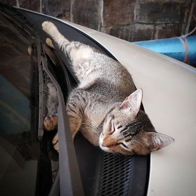 Pet Portraits EyeEm Selects Domestic Cat Pets Feline Adorable Kitten<3 Cute Cat Kitten Cats