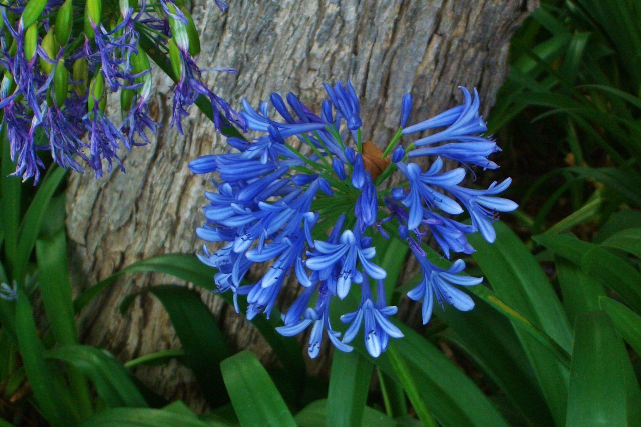 flower, beauty in nature, purple, nature, growth, fragility, plant, blue, petal, freshness, day, flower head, outdoors, green color, no people, leaf, close-up, blooming, hyacinth