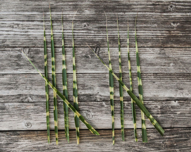 10 Grass Lines Checklist Close-up Counting Dashboard Green Color Nature No People Number Pattern Plant Strokes Table Tally Ten Textured  Wood Wood - Material