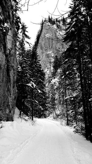 Valley Kościeliska Kościelisko Winter Winter Wonderland Snow Covered Snow Nature Nature_collection Nature Photography Nature Of Poland