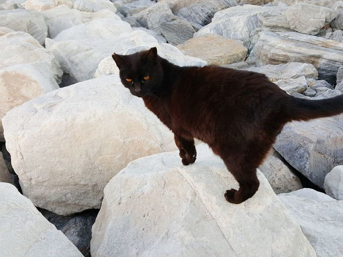 Black Cat Cat On Rock Black And White Pets Rock - Object Animal Themes Cat