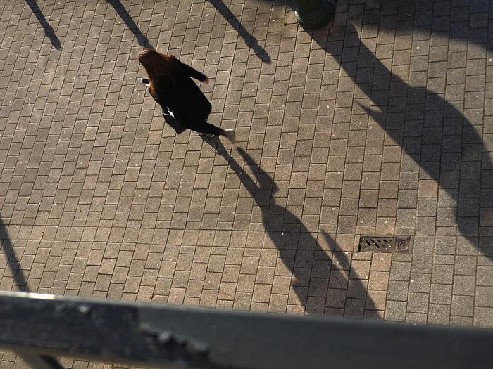 Shadow. Bird Day Focus On Shadow Birdview High Angle View No People Outdoors Perching Shadow Street Streetphotography Sunlight Birdv