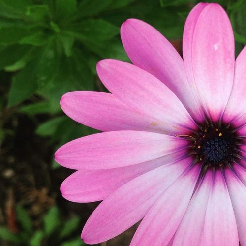 Flower power. Flowers Flowers,Plants & Garden Nature_collection First Eyeem Photo