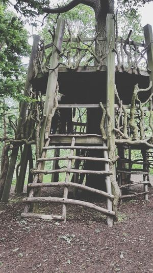 The Great Outdoors - 2017 EyeEm Awards Day Tree Outdoors Architecture No People Sky Tree House♥