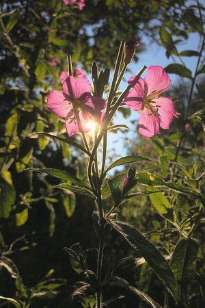 Flowers Sunlight Nature EyeEm Nature Lover