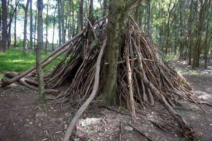 Abundance Beauty In Nature Branch Day Forest Growth Humpy Indigenous Culture Landscape Log Natural Wood Structure Nature No People Outdoors Root Scenics Tranquil Scene Tranquility Tree Tree Trunk WoodLand