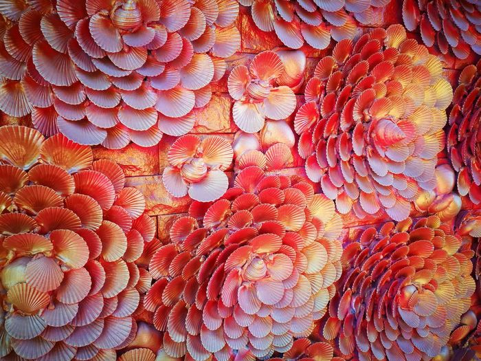 Flower Shell Full Frame Backgrounds Textured  Close-up Pattern No People Abstract