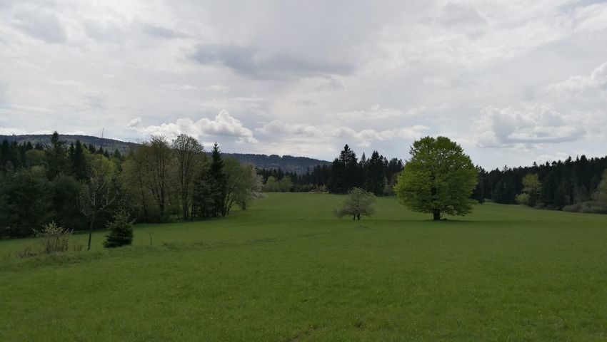 Countryside view in Capartice, Cesky les, Plzensky kraj, Czech Republic Tree No People Cloud - Sky Beauty In Nature Grass Nature No Filter Czech Republic Czech Republic🇨🇿 Countryside Landscape Countryside Green Green Color Green