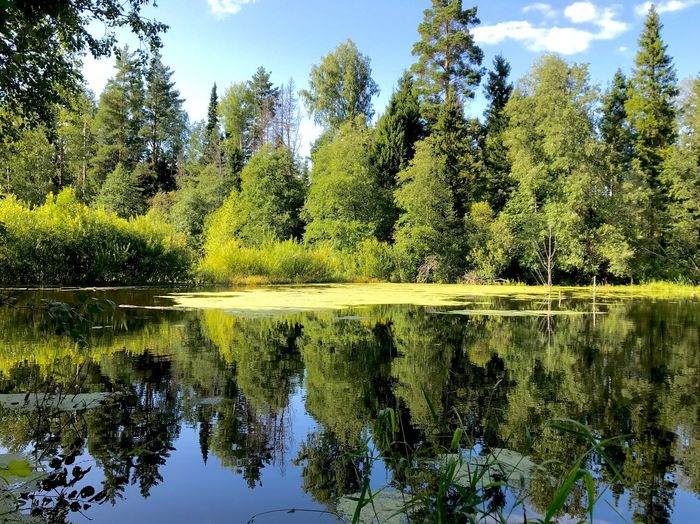 Tree Plant Water Reflection Tranquility Lake Growth Green Color Day Forest Symmetry