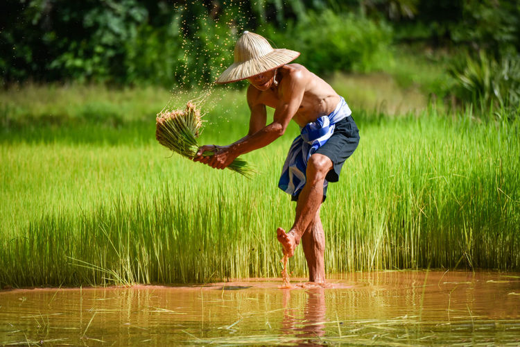 Shirtless man farming in water on field
