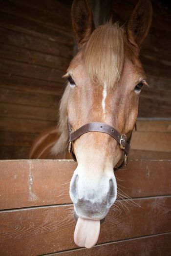 Horses Stables Animal Looking At Camera Animal Body Part