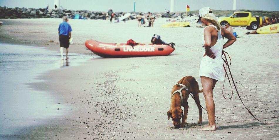 Dog Walking Scenery Shots At The Beach Summer In Denmark