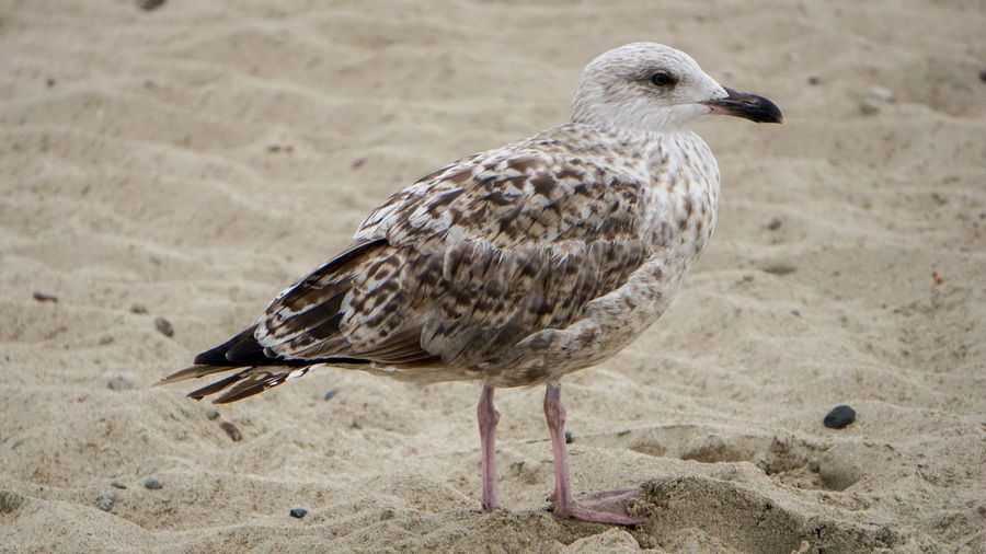 seagull on the