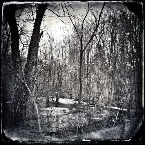 Black And White Haunted Monochrome_Monday The Dark Forest
