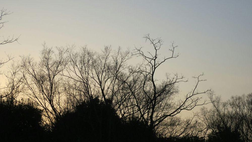 会社帰りに、渋滞にハマった車からのショット!😄 Taking Photos Enjoying Life Silhouette Tree Silhouette シルエット部 Silhouette_collection Silhouettes Sunset Silhouette Sunset Silhouettes 黄昏